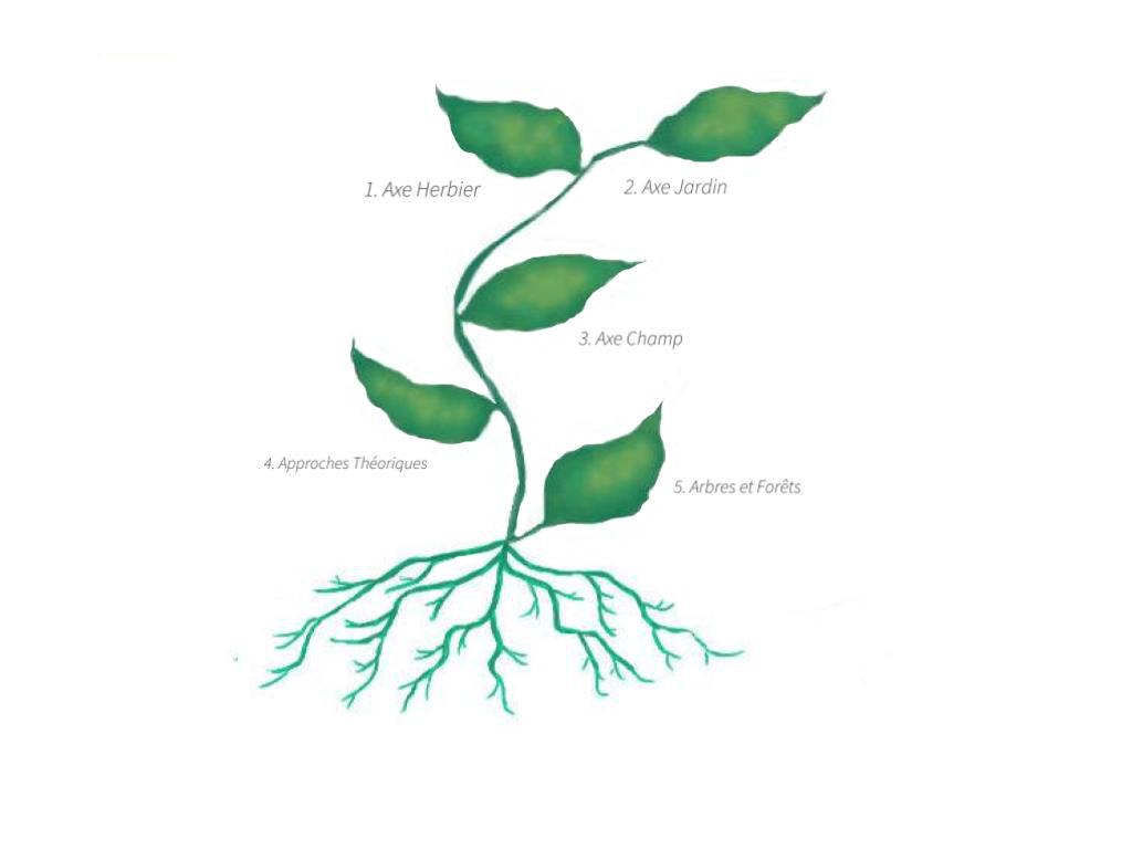 5 Leaf Plant